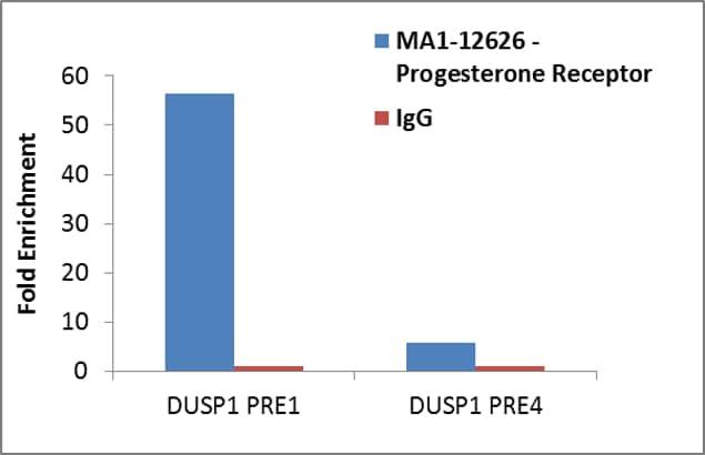 Progesterone Receptor Antibody in ChIP assay (ChIP)