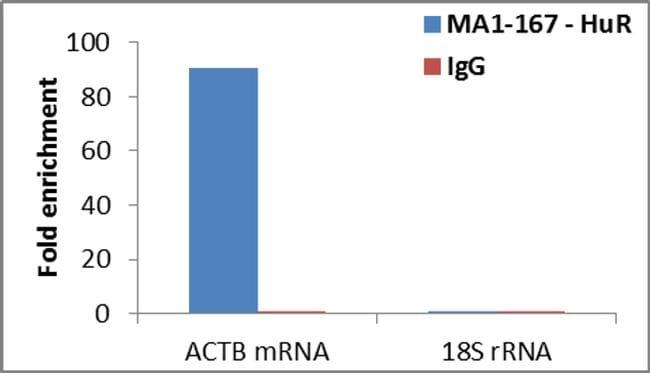 HuR Antibody in Relative expression