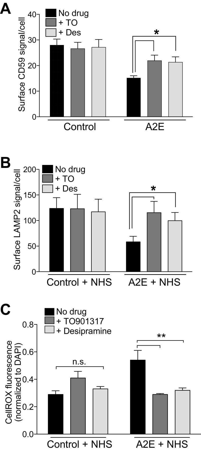 CD59 Antibody