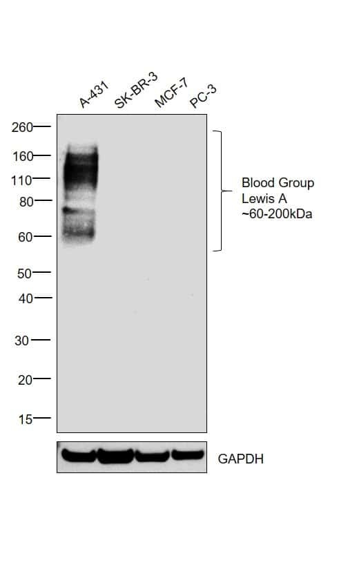Blood Group Lewis A Antibody in Relative expression