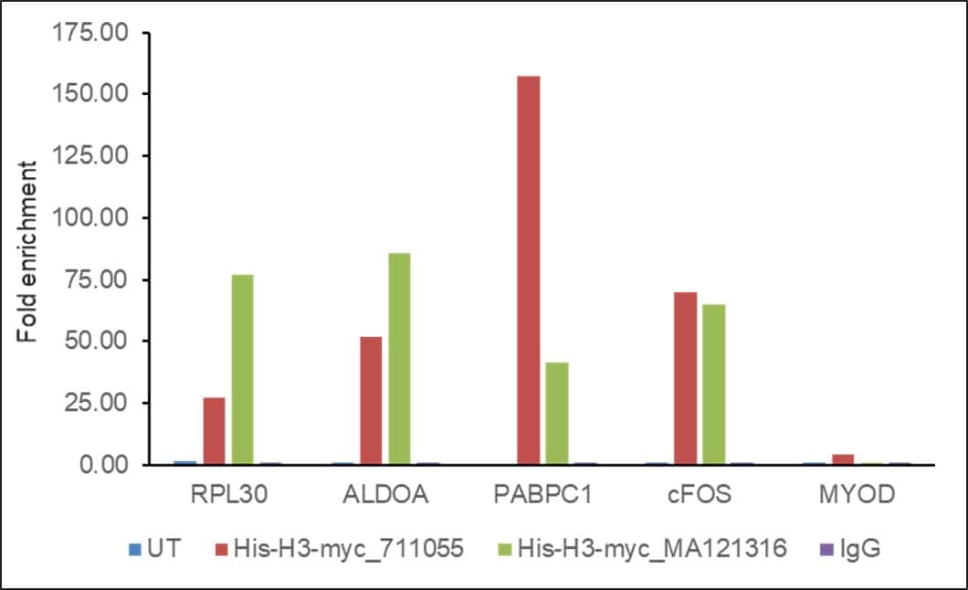Myc Tag Antibody in ChIP assay (ChIP)