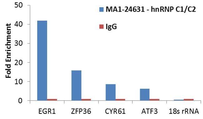 hnRNP C1/C2 Antibody in RNA Immunoprecipitation (RIP)