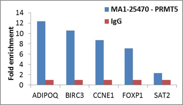 PRMT5 Antibody in ChIP assay (ChIP)