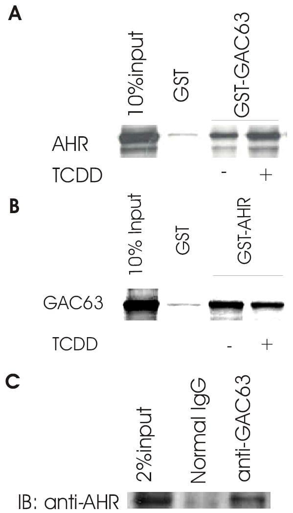 AHR Antibody