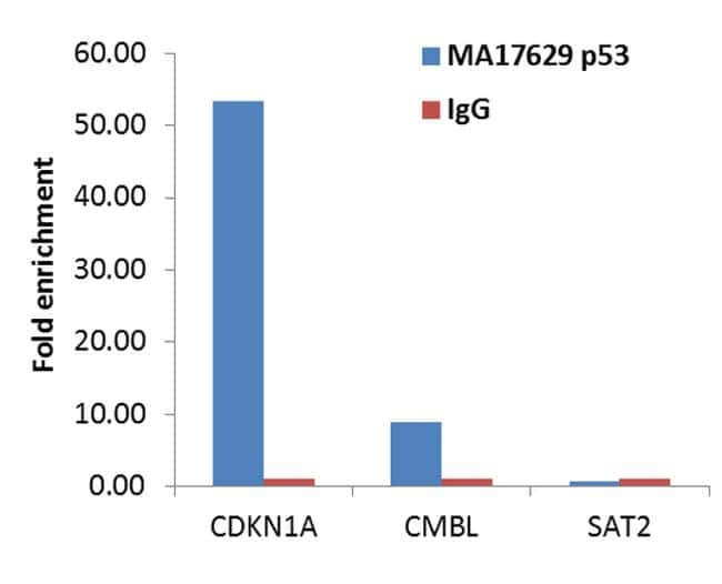p53 Antibody in ChIP assay (ChIP)