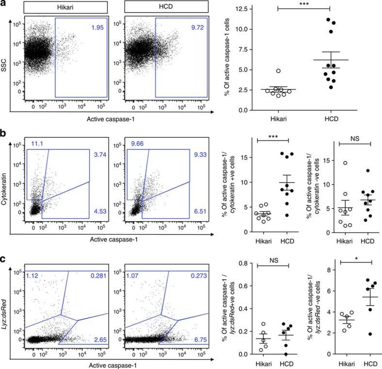 Cytokeratin Pan Type I/II Antibody
