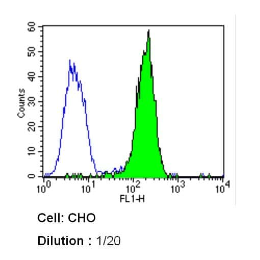 Caveolin 1 Antibody in Flow Cytometry (Flow)