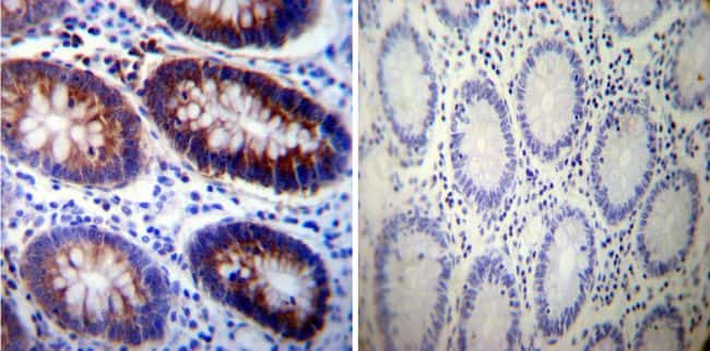 ATP1A3 Antibody in Immunohistochemistry (IHC)