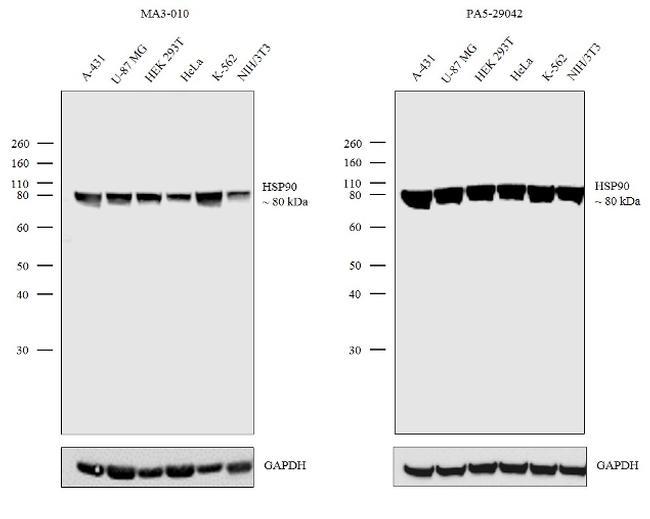 HSP90 alpha Antibody in Independent antibody