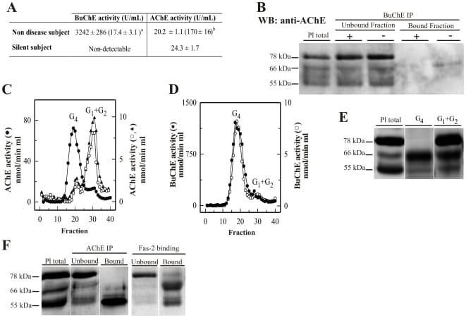 Acetylcholinesterase Antibody
