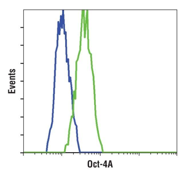 OCT4 Antibody in Flow Cytometry (Flow)