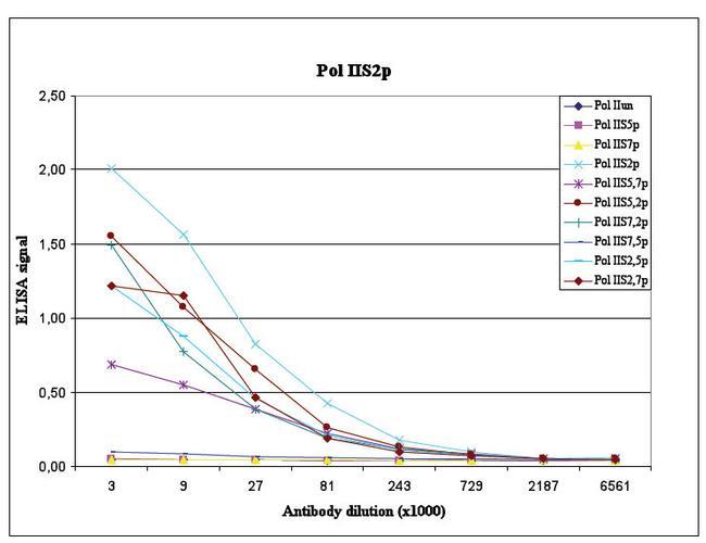 POLR2A Antibody in peptide-ELISA (pep-ELISA)