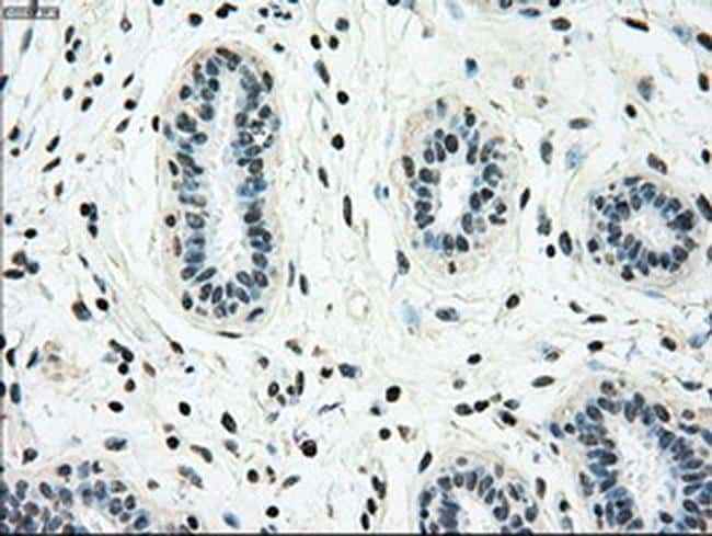 NRBP Antibody in Immunohistochemistry (Paraffin) (IHC (P))