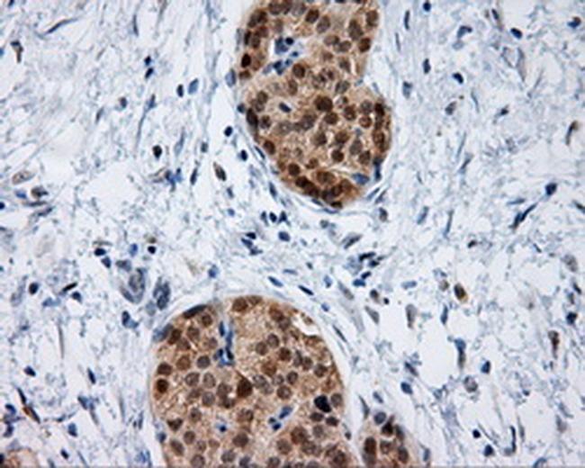 HIPPI Antibody in Immunohistochemistry (Paraffin) (IHC (P))