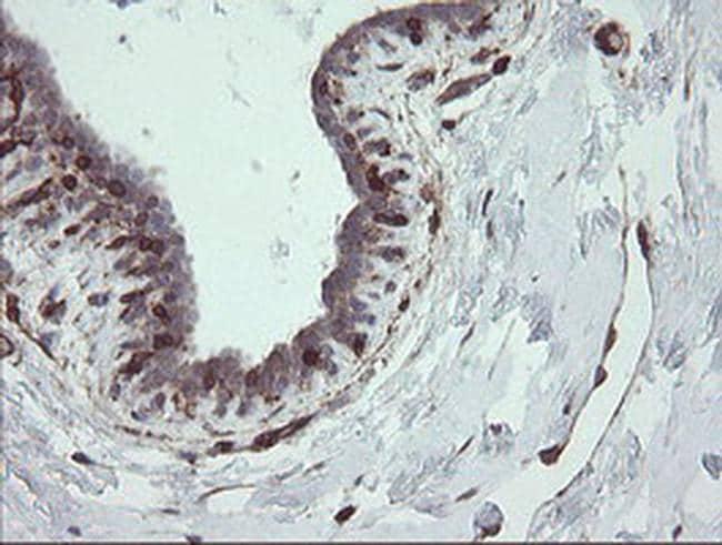 STING Antibody in Immunohistochemistry (Paraffin) (IHC (P))