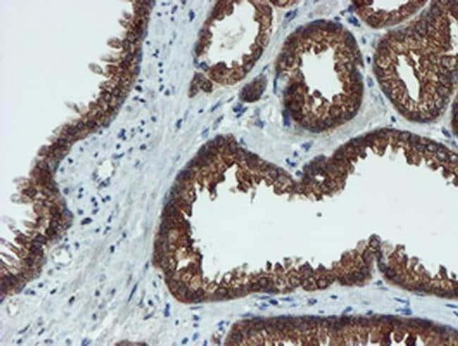 XTP4 Antibody in Immunohistochemistry (Paraffin) (IHC (P))