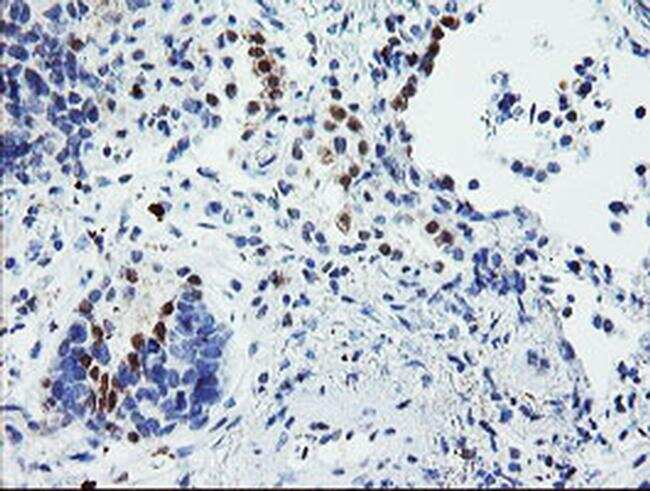 USP36 Antibody in Immunohistochemistry (Paraffin) (IHC (P))