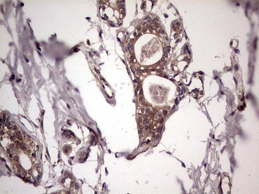 UFD1L Antibody in Immunohistochemistry (Paraffin) (IHC (P))