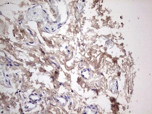SNX12 Antibody in Immunohistochemistry (Paraffin) (IHC (P))