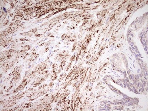NR0B2 Antibody in Immunohistochemistry (Paraffin) (IHC (P))