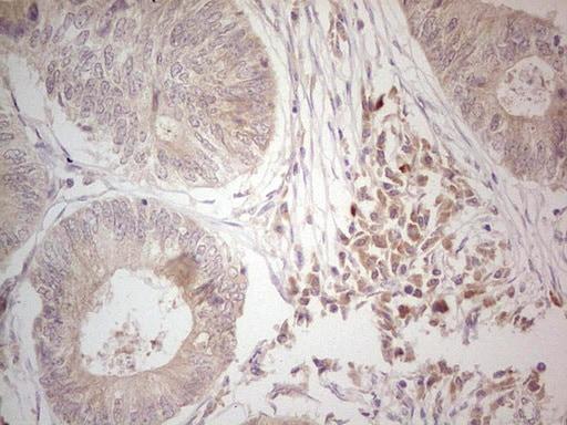 Hairless Antibody in Immunohistochemistry (Paraffin) (IHC (P))