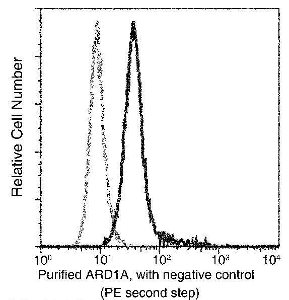 C19orf10 Antibody in Flow Cytometry (Flow)