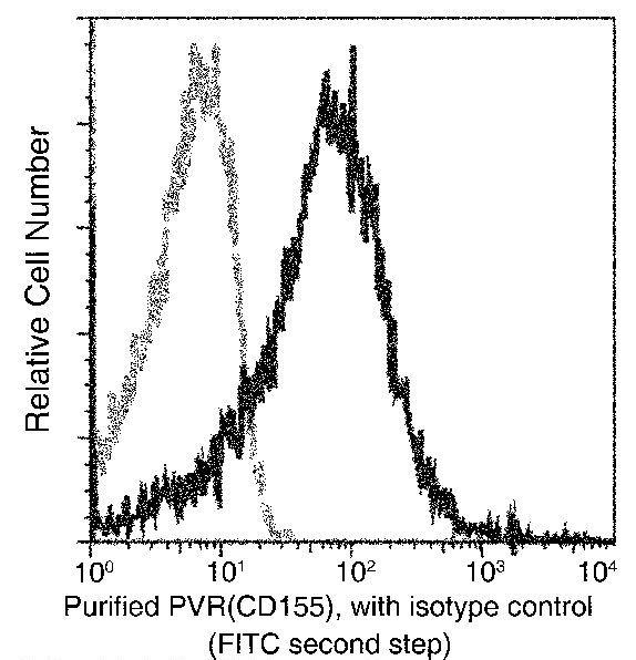 CD155 Antibody in Flow Cytometry (Flow)