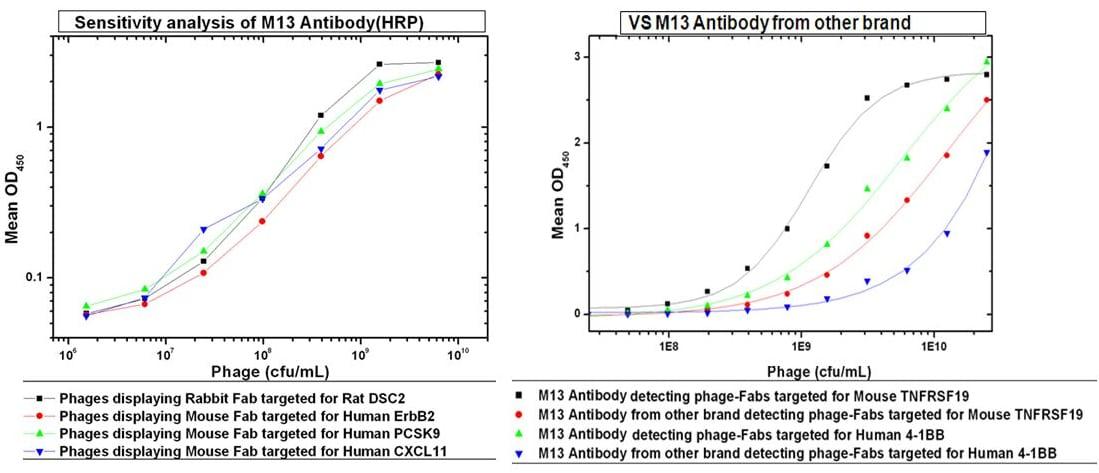 M13 Phage coat protein Antibody in ELISA (ELISA)