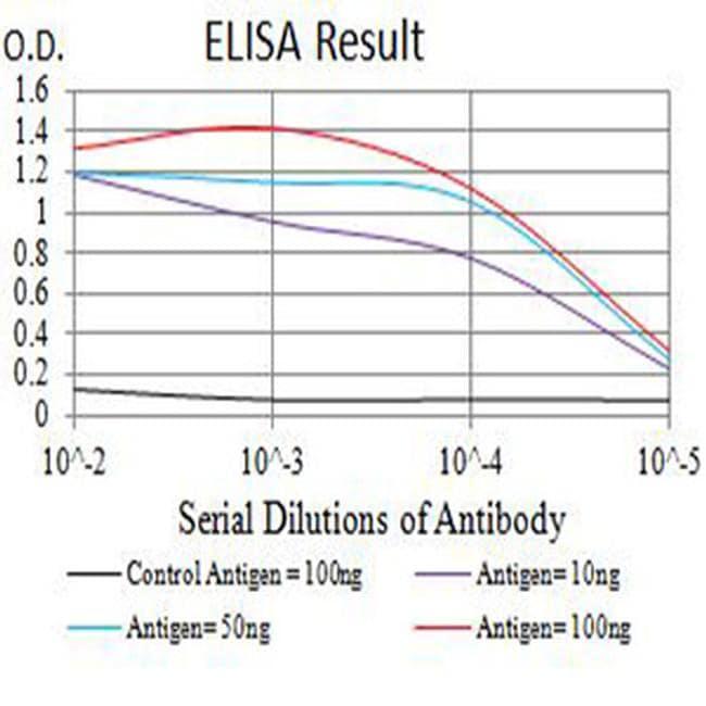 Arp3 Antibody in ELISA (ELISA)