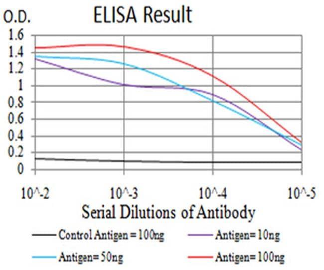 BIN1 Antibody in ELISA (ELISA)