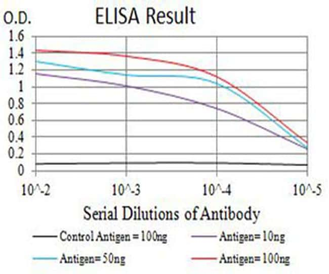 CHRNB4 Antibody in ELISA (ELISA)