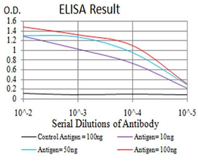 LEF1 Antibody in ELISA (ELISA)
