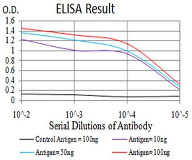 PLD2 Antibody in ELISA (ELISA)