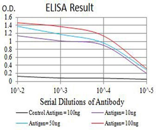 AMPK beta-2 Antibody in ELISA (ELISA)