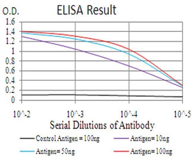 RAB13 Antibody in ELISA (ELISA)