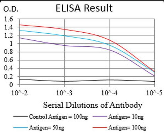 TRF2 Antibody in ELISA (ELISA)