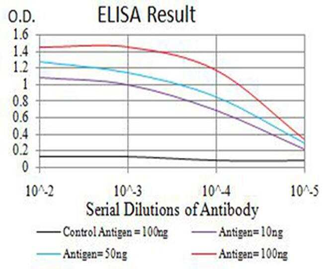 AP2 beta Antibody in ELISA (ELISA)