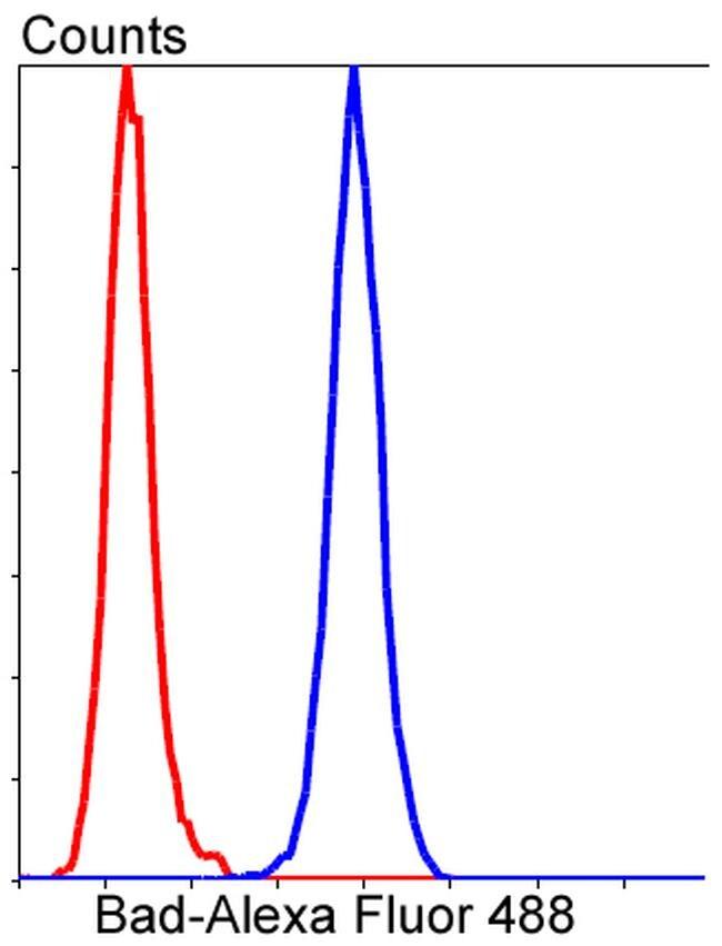 BAD Antibody in Flow Cytometry (Flow)