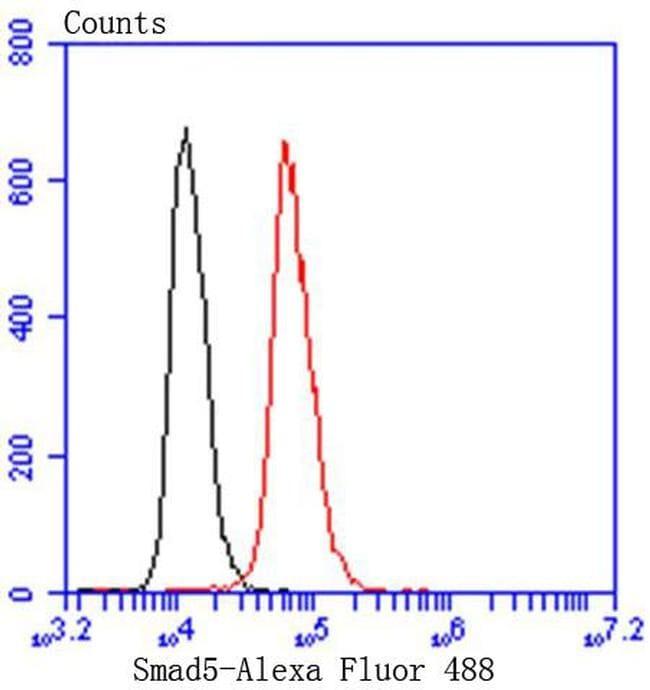 SMAD5 Antibody in Immunohistochemistry (Paraffin) (IHC (P))