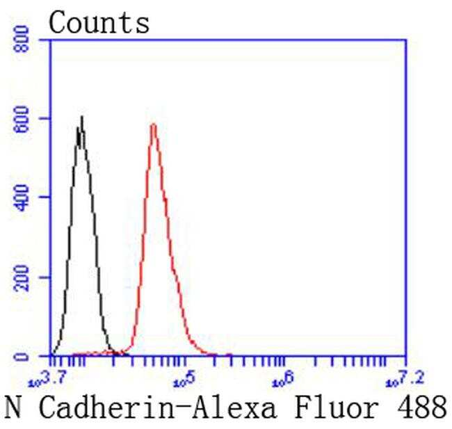 N-cadherin Antibody in Flow Cytometry (Flow)