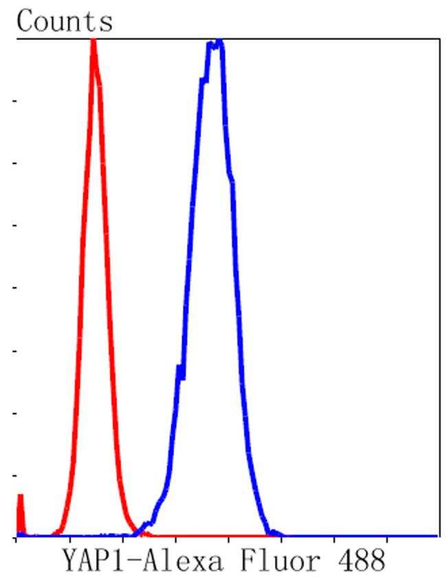 YAP1 Antibody in Flow Cytometry (Flow)
