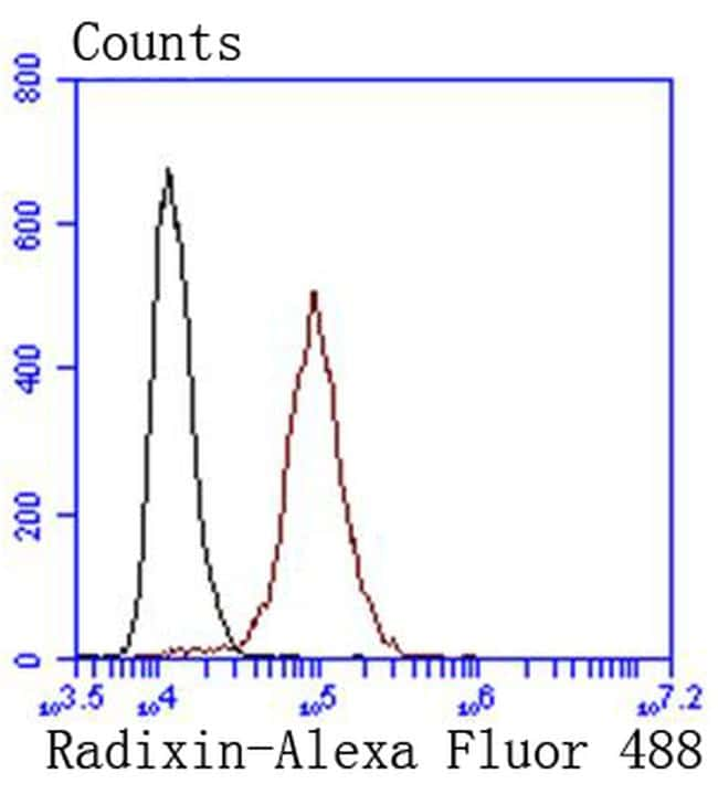 Radixin Antibody in Flow Cytometry (Flow)