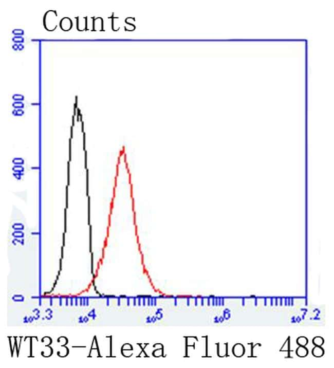 WT1 Antibody in Flow Cytometry (Flow)