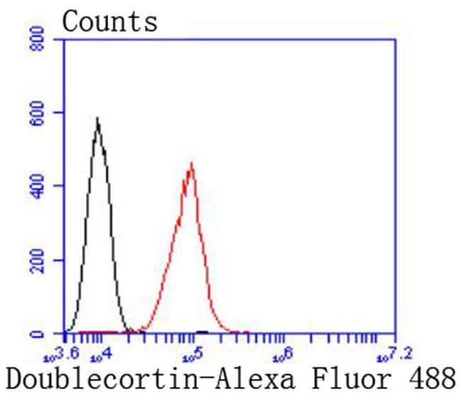 Doublecortin Antibody in Flow Cytometry (Flow)