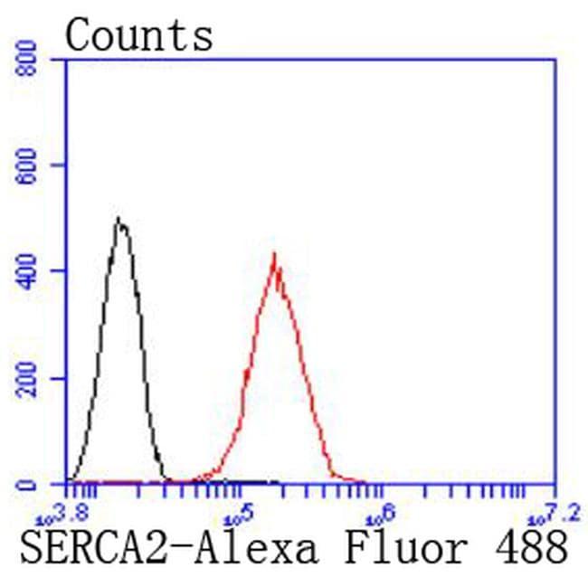 SERCA2 ATPase Antibody in Flow Cytometry (Flow)