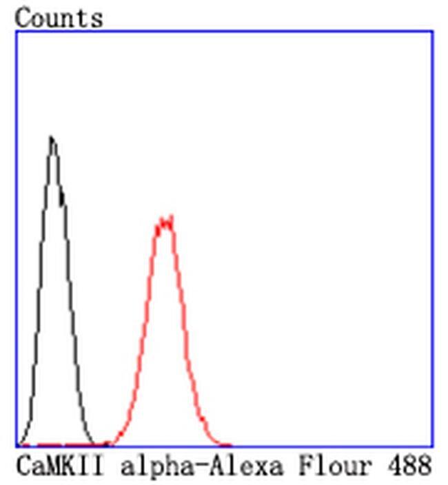 CaMKII alpha Antibody in Flow Cytometry (Flow)