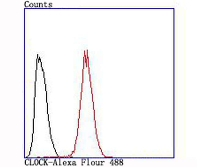 CLOCK Antibody in Flow Cytometry (Flow)