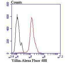 Villin Antibody in Flow Cytometry (Flow)