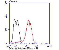 MATR3 Antibody in Flow Cytometry (Flow)