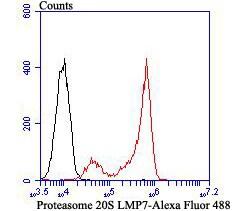 PSMB8 Antibody in Flow Cytometry (Flow)